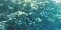 Film z rafy Blue hole+trasa widokowa z hotelu do rafy (EGIPT-DAHAB 2014)-Blue Hole Reef in Dahab